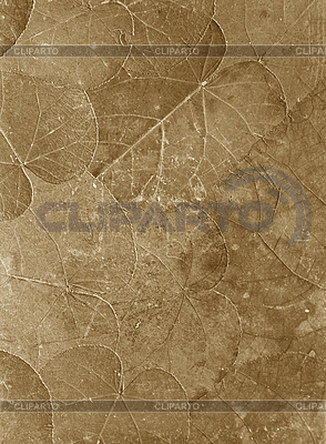 Retro with herbarium | High resolution stock photo |ID 3014737