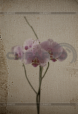 Vintage card with orchid | High resolution stock photo |ID 3016224