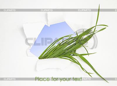 在窗口孔绿草如茵 | 高分辨率照片 |ID 3016227
