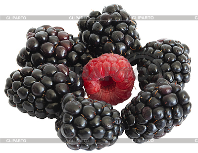 Blackberry and raspberry on the white   High resolution stock photo  ID 3016495