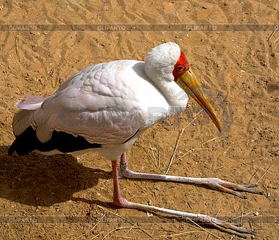 Żółtodzioba Stork | Foto stockowe wysokiej rozdzielczości |ID 3017871