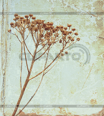 Vintage flower on old book cover   High resolution stock photo  ID 3018136