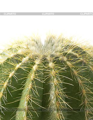 Cactus | High resolution stock photo |ID 3018147