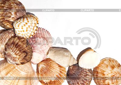 Shells | High resolution stock photo |ID 3018210