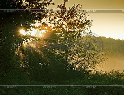 Wschód słońca w lesie | Foto stockowe wysokiej rozdzielczości |ID 3036769