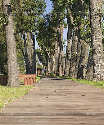 Wanderweg im Herbstpark   Foto mit hoher Auflösung  ID 3065392