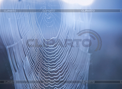 Spider web with water drops. Soft focuse.   High resolution stock photo  ID 3269989