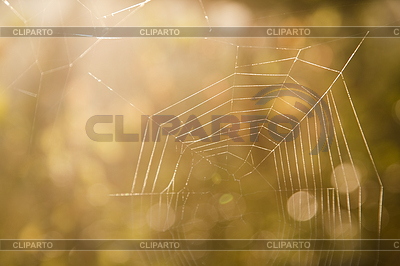 Spider web   High resolution stock photo  ID 3278052