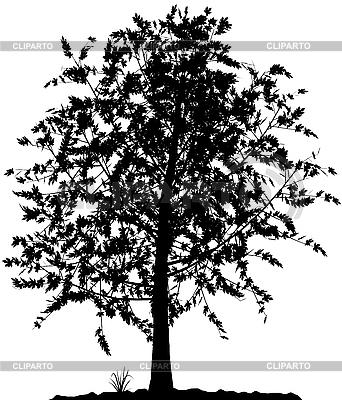 Tree silhouette | Stock Vector Graphics |ID 3013574