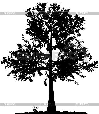 Tree silhouette   Stock Vector Graphics  ID 3013582