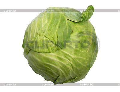 Single green cabbage with dew   High resolution stock photo  ID 3032676