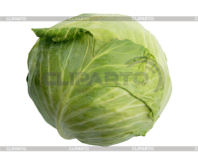Single green cabbage   High resolution stock photo  ID 3032677