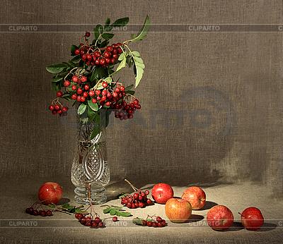 Bukiet Ashberry w wazonie i jabłka czerwone | Foto stockowe wysokiej rozdzielczości |ID 3032757