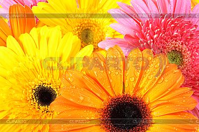핑크와 오렌지 꽃 배경 | 높은 해상도 사진 |ID 3032872
