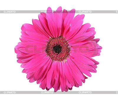 Pink flower | High resolution stock photo |ID 3032890