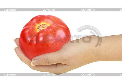 Pomidor w ręku   Foto stockowe wysokiej rozdzielczości  ID 3032954