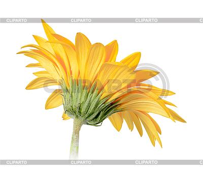 Желтый цветок | Фото большого размера |ID 3032991