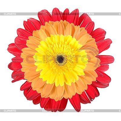 Three flowers   High resolution stock photo  ID 3033054