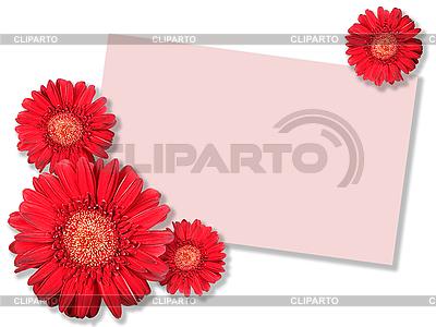Rote Blume und leere Visitenkarte | Foto mit hoher Auflösung |ID 3033128