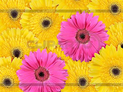 黄色和粉红色的花朵背景 | 高分辨率照片 |ID 3033243