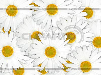 Background of white camomile flowers | High resolution stock photo |ID 3033247