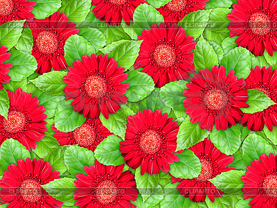 Background of red flowers and green leaves | High resolution stock photo |ID 3144380