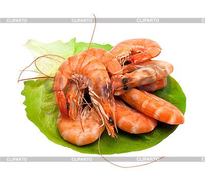 Frische Krabben auf Salatblätter  | Foto mit hoher Auflösung |ID 3013751
