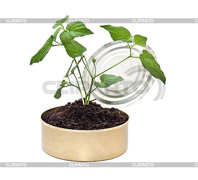 年轻的植物在地面 | 高分辨率照片 |ID 3014003