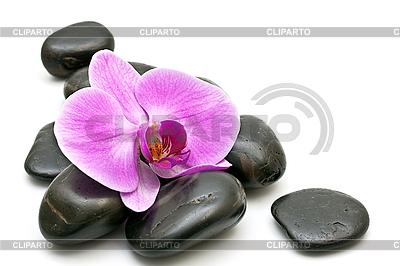 Rosa Orchidee und Zen-Steine   Foto mit hoher Auflösung  ID 3014011