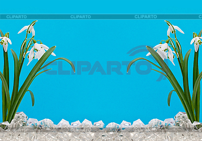 The first snowdrops in the ice   High resolution stock photo  ID 3014552