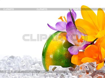 Osterei mit Blumen im Eis | Foto mit hoher Auflösung |ID 3014557