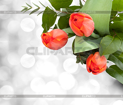 Bouquet of tulips | High resolution stock photo |ID 3014589