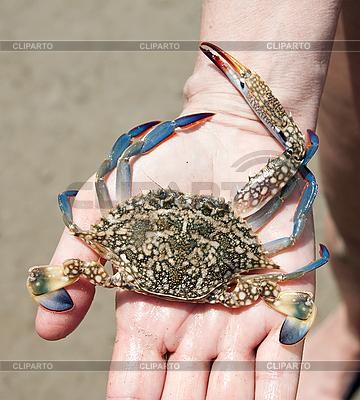 Krabbe auf der Handfläche | Foto mit hoher Auflösung |ID 3014639