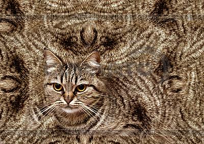 Абстрактный фон с кошкой | Фото большого размера |ID 3014641