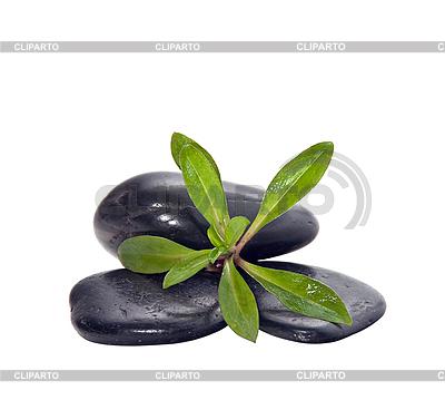 Handvoll Steine mit grüner Pflanze | Foto mit hoher Auflösung |ID 3019219