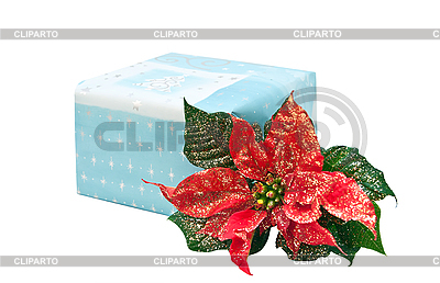 Geschenk-Box mit Weihnachtsblume | Foto mit hoher Auflösung |ID 3019244