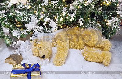 Polar bear toy sleeping under the Christmas tree | High resolution stock photo |ID 3113169