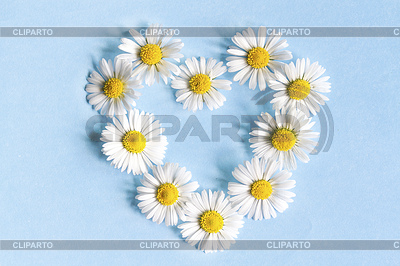 Frame of flowers daisies in shape of heart on blue | High resolution stock photo |ID 5790463