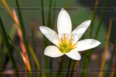 흰색 열 대 꽃   높은 해상도 사진  ID 3015415