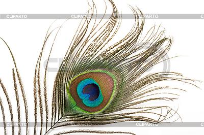 Pawie pióro z bliska | Foto stockowe wysokiej rozdzielczości |ID 3015593