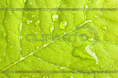 Zielony liść z kropelek wody | Foto stockowe wysokiej rozdzielczości |ID 3015665
