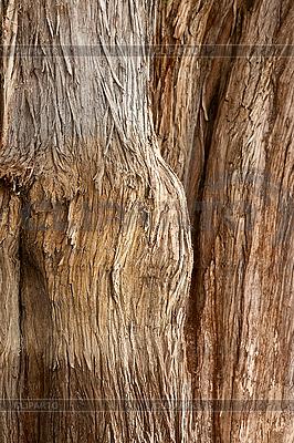 툴레 나무의 껍질 | 높은 해상도 사진 |ID 3015712