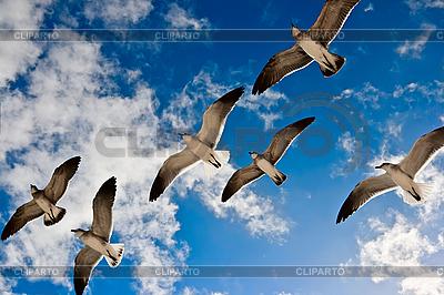 Чайки летают в воздухе | Фото большого размера |ID 3015730