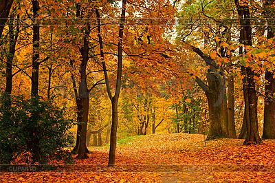 Herbstliche Allee   Foto mit hoher Auflösung  ID 3015750
