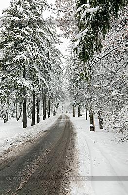 Winter-Straße im verschneiten Wald | Foto mit hoher Auflösung |ID 3016913