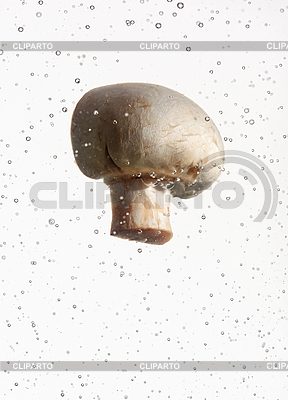 Field mushroom falling in water with air bubbles  | High resolution stock photo |ID 3017048