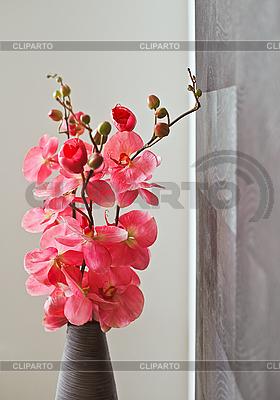 Rosa Orchidee in Wickervase   Foto mit hoher Auflösung  ID 3017085