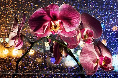 Rosa Orchidee mit Tropfen | Foto mit hoher Auflösung |ID 3017138