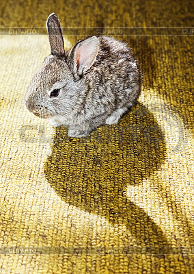 Kaninchen auf dem Teppich | Foto mit hoher Auflösung |ID 3017262
