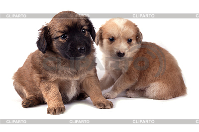 Two little dogs | High resolution stock photo |ID 3017314